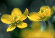 高清近距离花朵图片(28张)