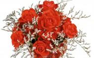 浪漫玫瑰图片(23张)