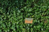 白花败酱花朵图片(1张)