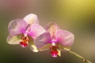 兰花图片(12张)