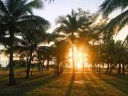 笔直的椰子树图片(11张)