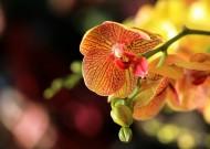 惊艳蝴蝶兰花卉图片(7张)