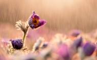 风雨中的花儿图片(8张)