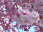 淡雅的梅花图片(15张)