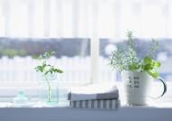 室内植物草药图片(32张)