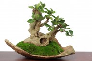 姿态优美的绿色植物盆栽图片(8张)