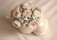 淡雅的玫瑰花图片(14张)