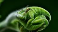植物藤蔓图片(6张)