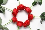 七夕情人节红玫瑰图片(10张)