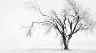 一棵孤单的树图片(7张)