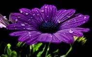 清新的植物图片(10张)