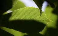 清新的叶脉花草图片(13张)