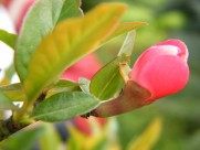 红艳艳的石榴花图片(28张)