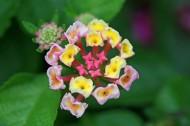 靓丽五色梅花卉图片(20张)