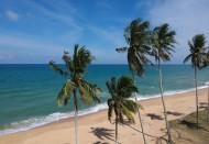 常绿乔木椰子树图片(16张)