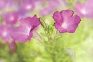 X光下的花朵图片(39张)