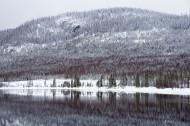 被大雪覆盖的松树林图片(13张)