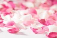粉红花瓣图片(12张)