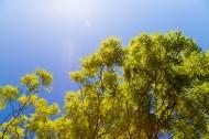 树枝上的绿叶图片(7张)