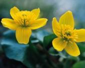 漂亮的黄色野花图片(14张)