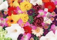 鲜艳多彩鲜花背景图片(5张)