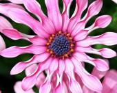 花卉摄影图片(31张)