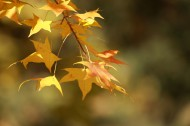 秋季凋零的叶子图片(9张)