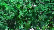树冠图片(14张)