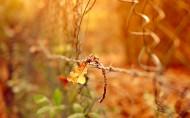 唯美秋天树枝与树叶图片(11张)