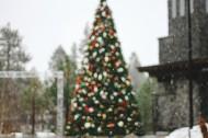 装饰美丽的圣诞树图片(11张)