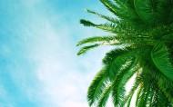 海边椰树图片(15张)