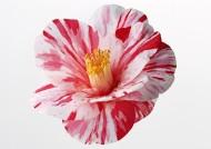花卉造型特写图片(102张)