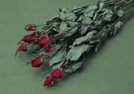 玫瑰干花图片(5张)