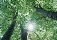 绿树遮阴图片(103张)