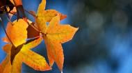 唯美的秋叶风景图片(10张)
