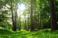 林中阳光景色图片(14张)