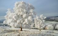 唯美的冬季雪景图片(6张)