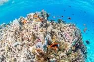 海底珊瑚鱼群图片(9张)