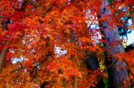 秋季风景图片(32张)