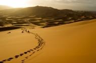大漠里的风光图片(20张)