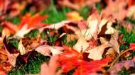 唯美秋天落叶风景图片(7张)