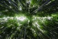 高耸的竹子图片(11张)