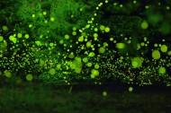 盛夏森林里的光圈图片(7张)