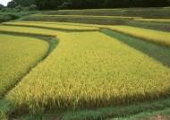 秋季稻田图片(21张)