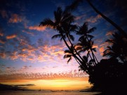 椰树晚霞图片(36张)