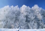 冬季的树木图片(12张)
