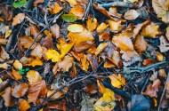 秋天的落叶图片(15张)