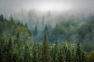 雾气缭绕的森林图片(10张)