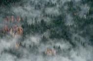 森林上空的雾图片(13张)
