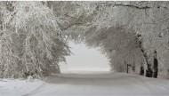 雪后的林间道路图片(15张)